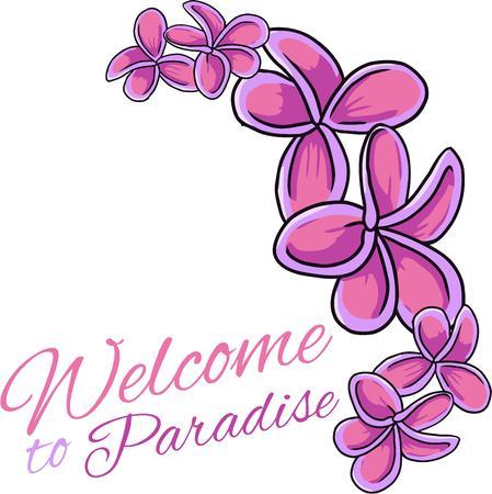 laurier rose: Les fleurs tropicales pour un accent d'�t�.