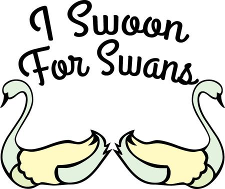 swans: Pretty swans for bird lovers. Illustration