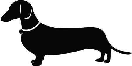 weiner: Dog lovers will enjoy this cute weiner dog.