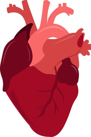 with aorta: Medical persons will like this heart.