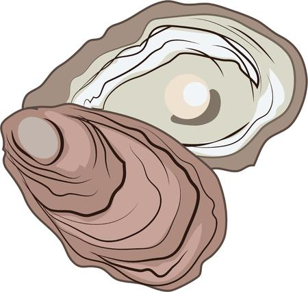 carapace: Finding a pearl in an oyster is everyones dream.