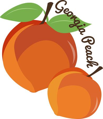 cling: Beautiful juicy looking peaches are perfect kitchen decor. Illustration