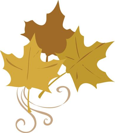 fall leaves: Decorate a fall project with beautiful leaves.