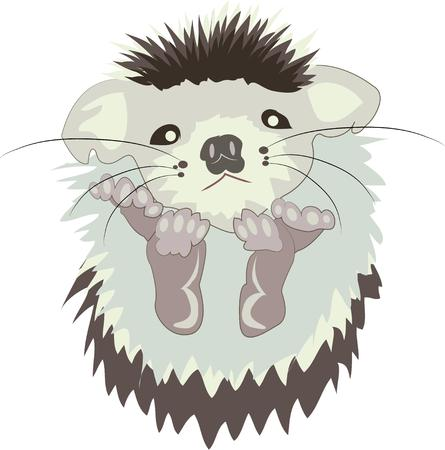 porcupine: Welcome a new baby with a cute baby porcupine.