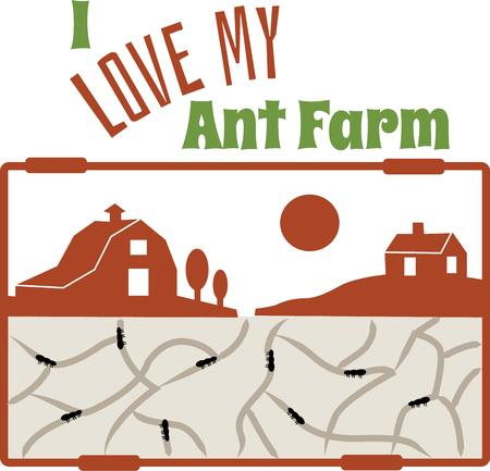 pleasing: Ant farms are a pleasing and curious insects for decades. Illustration