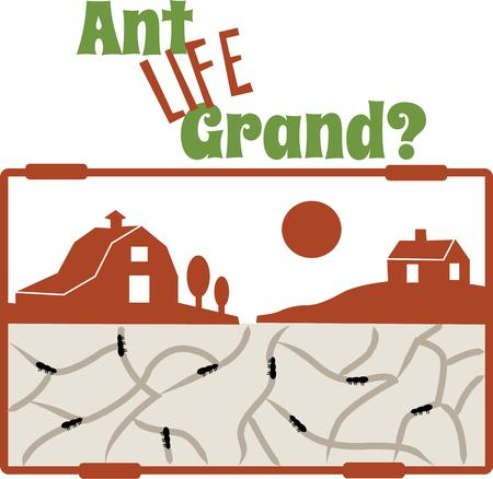 decades: Ant farms are a pleasing and curious insects for decades. Illustration