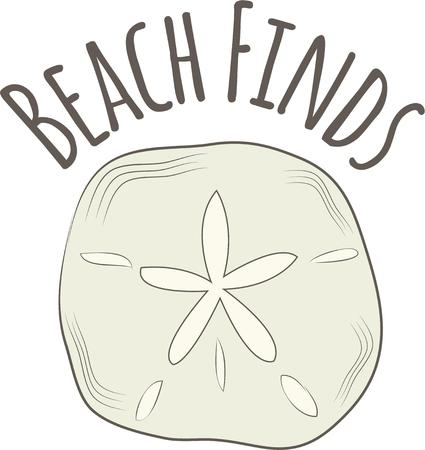 sand dollar: A sand dollar is a great beach decoration.