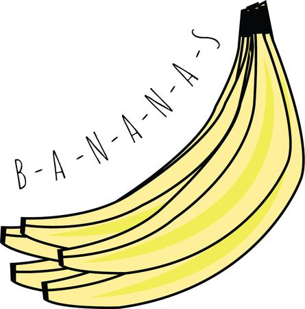plantain: Pretty bunch of bananas will look nice in any kitchen. Illustration