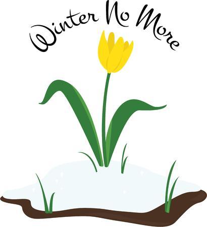acomodador: Utilice esta tulip�n para marcar el comienzo de la primavera.