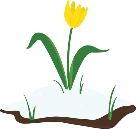 usher: Use this tulip to usher in spring.