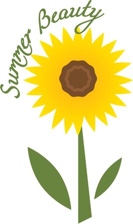 aster: Every friend is to the other a sun and a sunflower also. Illustration