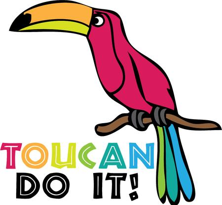 perch: A colorful toucan is a great project for a summer tshirt. Illustration