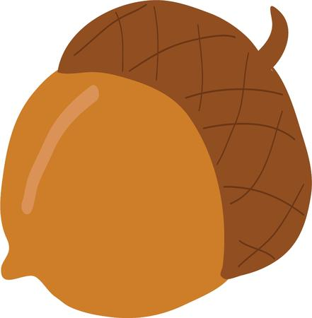 acorn seed: Your fall project will look great with an acorn. Illustration