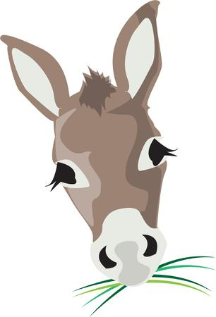 burro: This sweet face belongs to a sweet donkey.  Certainly not your typical burro!
