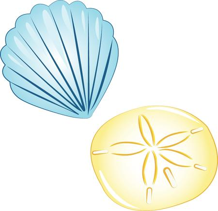 sand dollar: Sea shells are perfect for your vacation home. Illustration