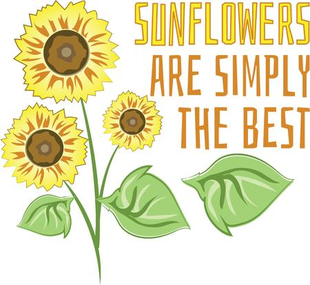 aster: Decorate your homes with the warm glow of sunflowers and add sunshine to your projects with this bold and beautiful design