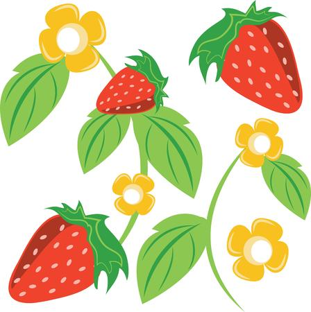 scent: Little screams summer quite like the sweet scent and ripe taste of fresh, plump strawberries.  Enjoy the harvest with this design on cozies, kitchen towels and more. Illustration