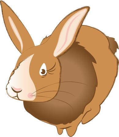 cottontail: