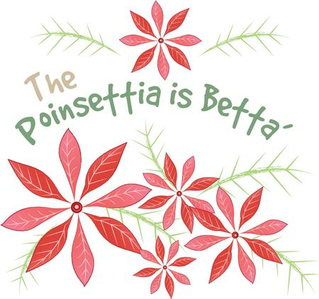 betta: Poinsettias are beautiful at Christmas time.  Use this design with your decorations. Illustration