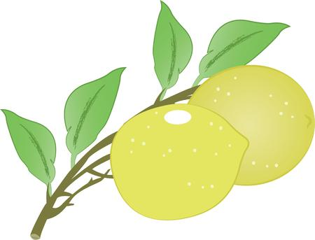 citrus tree: This zesty citrus can freshen up a winter kitchen and is perfect on table linens, area rugs, kitchen mats, wall decor, wall plaques and more. Illustration