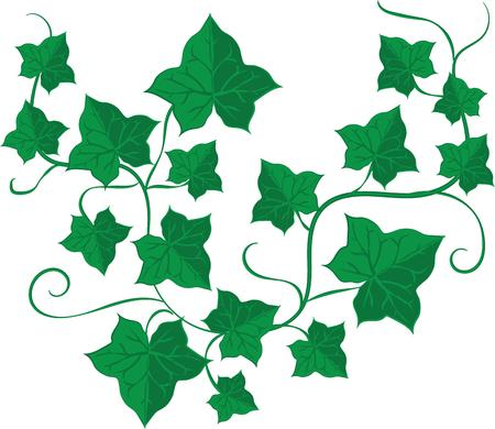 ivy vine: Vines add unique style and cheer to any space.  Get the spirit of spring on your projects with this design.