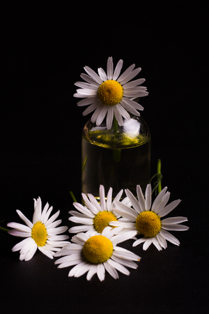 Chamomile essential oil on a black background Stock Photo