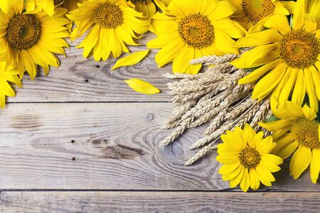 Background with yellow sunflowers and wheat ears on a old wooden boards. Space for text. 免版税图像