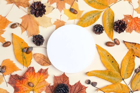 White round frame with dried autumn leaves, cones and acorns on light background. Autumn composition. Flat lay, top view, copy space. 版權商用圖片