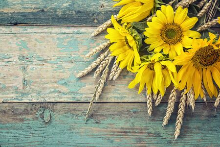 Background with a bouquet of yellow sunflowers and wheat ears on a blue painted wooden boards. Space for text. Фото со стока
