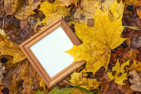 Empty square wooden frame in the yellow fallen leaves. Autumn forest, fall scene. Top view with copy space. Stock Photo