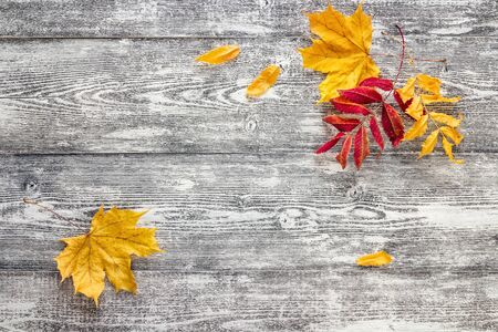Autumn leaves on the gray wooden boards. Space for text.