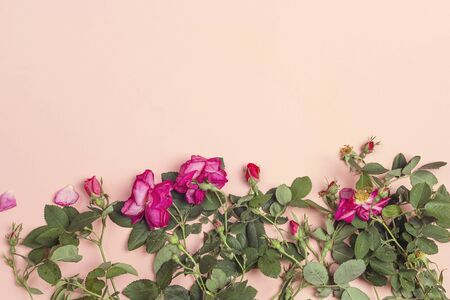 Border of garden roses on a pink background. Copy space, top view composition. Imagens - 128899120