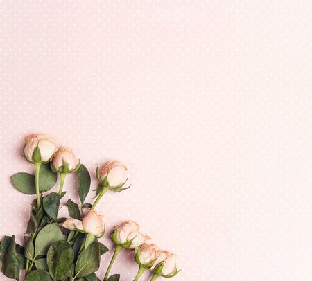Little rose on a pink polka dot background. Place for text. Flat lay, top view.