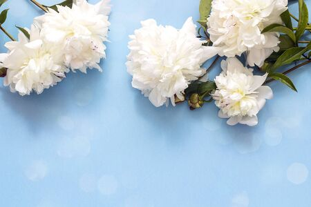 Blue background with white peonies. Copy space. Top view.