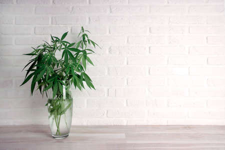 Cannabis plant in a vase on a white brick wall with copy space. Medical hemp.