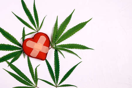 Heart with adhesive plaster and marijuana leaves on white background with copy space. Use of medical marijuana in cardiology.