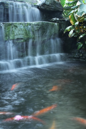Waterfall over the Fancy carp pond photo