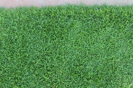 Green grass background image  photo