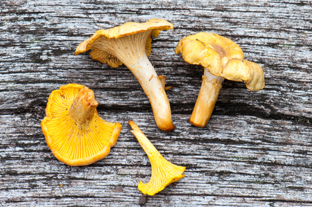 cantharellus: Harvets of chanterelles -Cantharellus cibarius in a wooden background Stock Photo