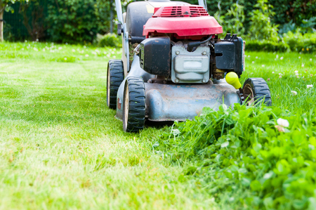 mowing grass: Lawn mowing in garden
