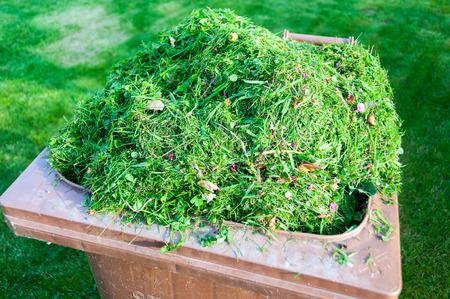 garden lawn: mowing the lawn in my garden