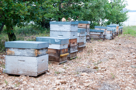 hives: Wooden hives in Provence, France