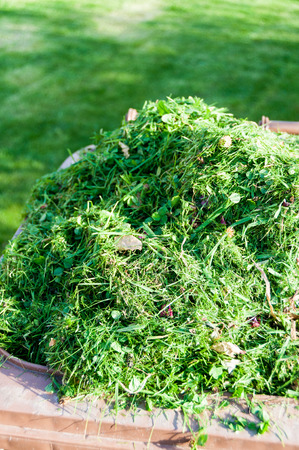 cuttings: Grass cuttings in a plastic container Stock Photo