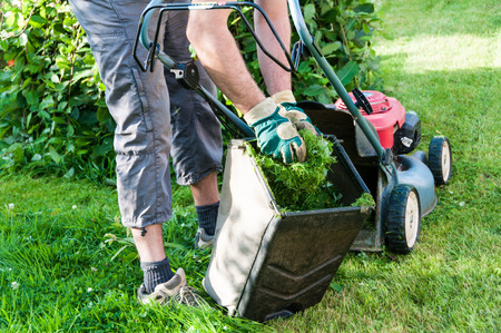 lawn care: mowing the lawn in my garden