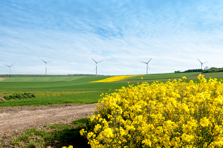electric generating plant: rapeseed field with wind turbine