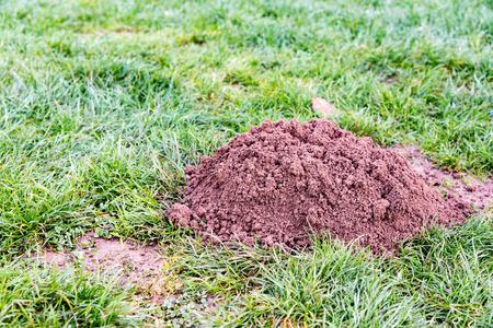 molehill: Molehill in a french garden Stock Photo