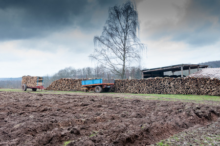 woodshed: trailer loaded with logs of firewood Stock Photo
