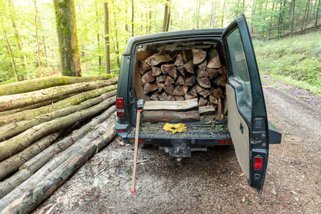 Wooden log cut in a vehicle, in forest