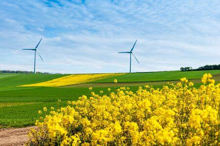 rapeseed field with wind turbine