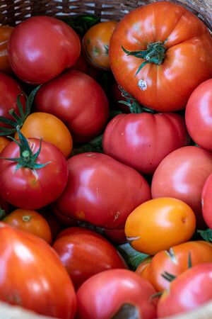 Variety old organic tomatoes on a market